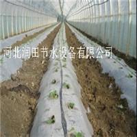 河北邯郸大田滴灌