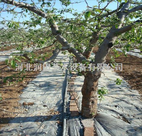 资阳安岳柠檬果树滴灌