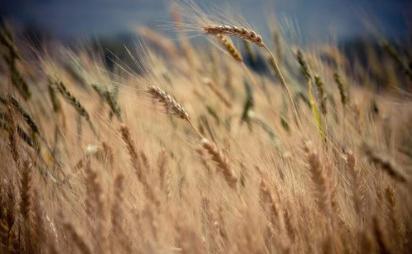 盐城大丰:农业转型发展助力乡村振兴