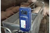 母猪电子饲喂站/杭州母猪自动喂养设备厂家