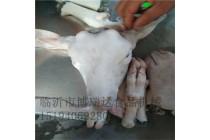羊头蹄烫脱一体机食品机械加工牲畜屠宰设备