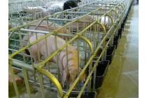 大连母猪限位栏 母猪定位栏 母猪单体栏